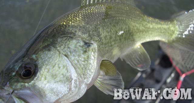 WFG biwako bass fishing guide a-2