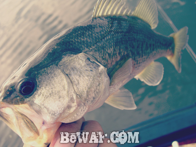 biwako bass fishing guide blog shousai 10