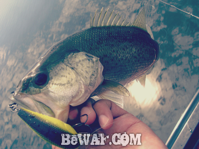 biwako bass fishing guide blog shousai 16