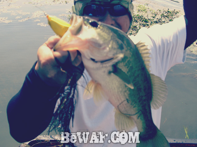 biwako bass fishing guide blog shousai 21