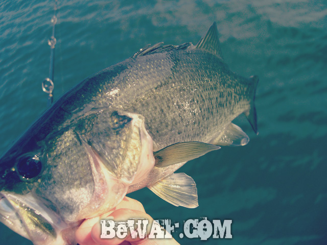 biwako bass fishing guide blog shousai 23
