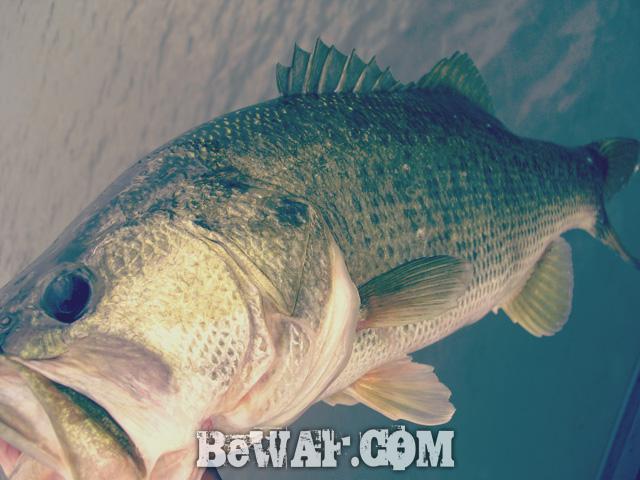 biwako bass fishing guide chouka shousai 8