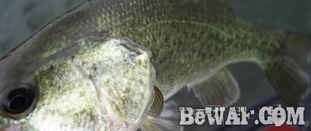 biwako bass fishing guide service 14