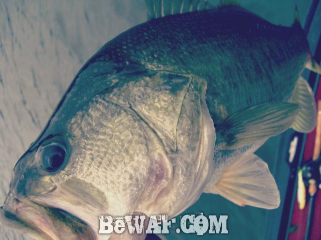 biwako bass fishing guide service 15