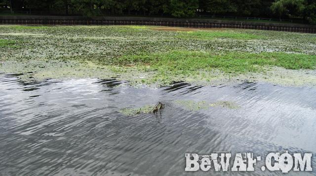 biwako bass fishing guide service 17