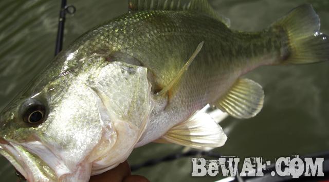 biwako bass guide chouka jackall lure 13