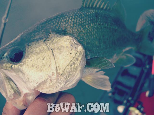 biwako bass turi chouka aki natu 10