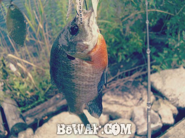 setagawa bass chouka shosai bassturi 3