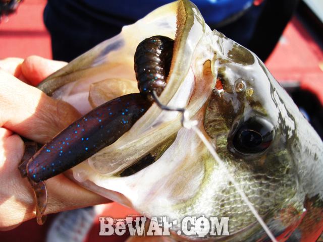 12 biwako bass fishing guide chouka