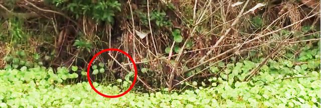 Ish-Monroe-frog-fisshing-nyumon-6