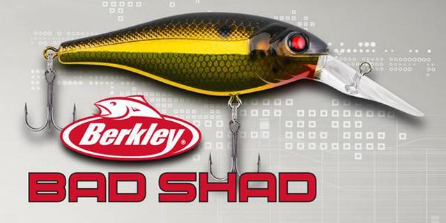 BAD SHAD がリリース!! (Berkley) 2