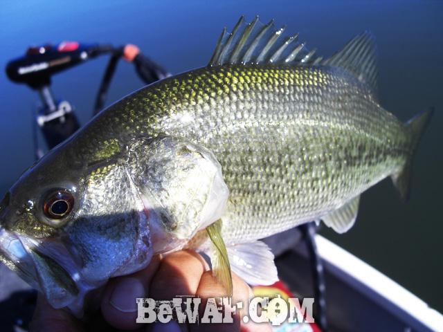 ibanaiko bass fishing chouka seven parms 8
