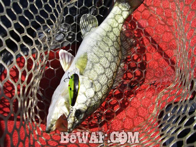 10 biwako marine bass owners cup 2015