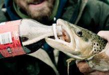 魚の止血剤に炭酸飲料は有効なのか? 10