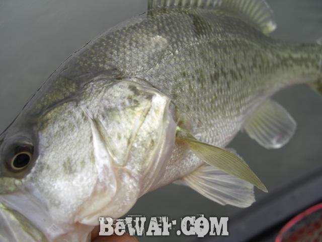 17 biwako bass guide chouka shousai