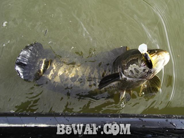 8 biwako marine bass owners cup 2015