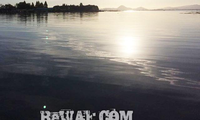 今日の琵琶湖 (11月11日) 1