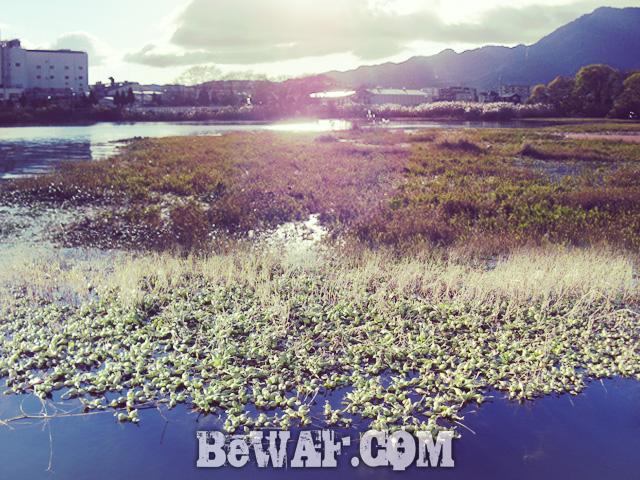 biwako bass fishing jackall deps chouka 11
