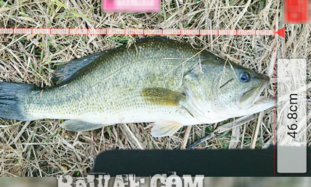 お客様からの釣果:中居様~クランクで46.8cm!!(リップラップガイド) 1