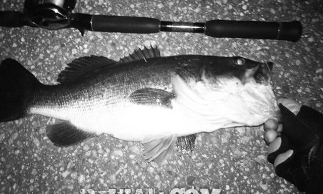 お客様からの釣果:岡村様~クランクで50cm!! 1