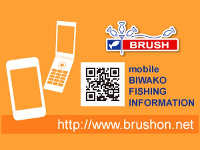 brushbiwako