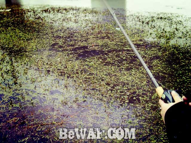 biwako bassfishing guide 12