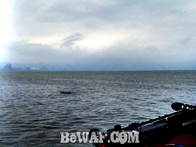 biwako bassfishing guide 16