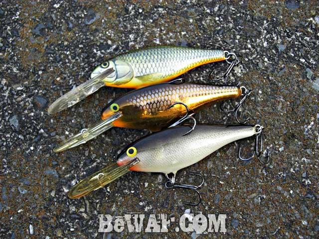 setagawa bass turi blog chouka 3