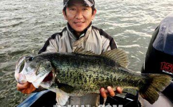 お客様からの釣果:関原様~ネコリグで60cm!!