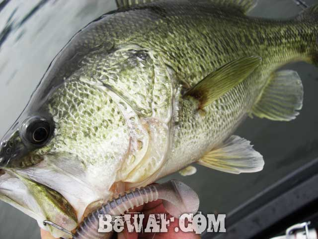 biwako bass fishing guide blog 14