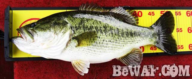 biwako bass fishing guide yasui biwako blog8