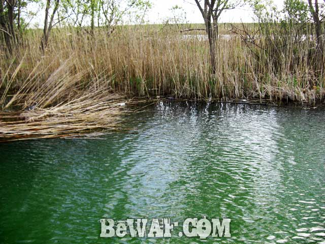 biwako bass fishing guide yasui nedan ninki blog 13