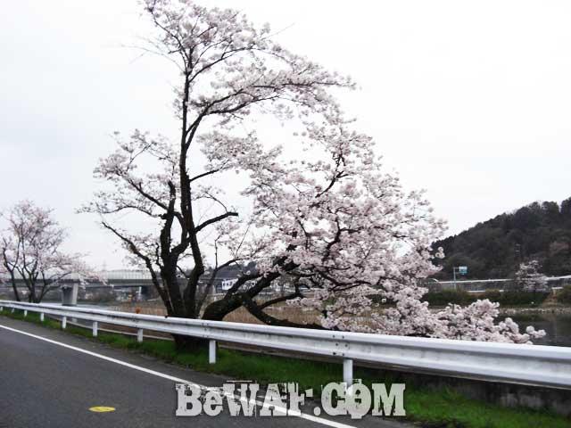 biwako guide yasui shashin 1