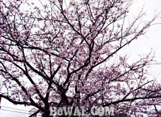 瀬田川へ (2016年 4月4日)
