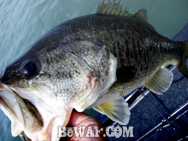 biwako bass fishing guide blog de su5