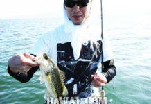 琵琶湖バスフィッシングガイドリポート~里様~ 28cm 10