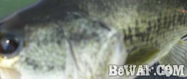 biwako bass guide 2016 blog ninki 11