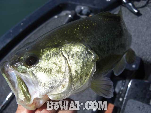 biwako bass guide yasui chouka blog9