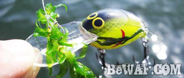 biwako bass turi guide yasui chouka blog 13