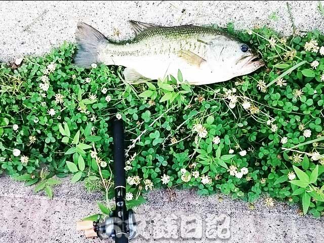setagawa-bass-chouka