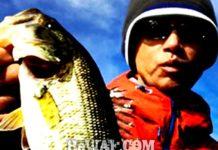 お客様からの釣果:内田様~琵琶湖で25~30cm ポロポロ 2