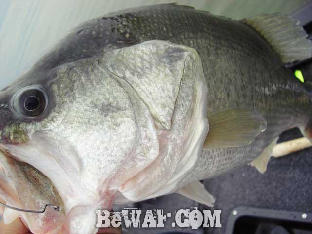 27-biwako-bass-guide-chouka-ayu-patern