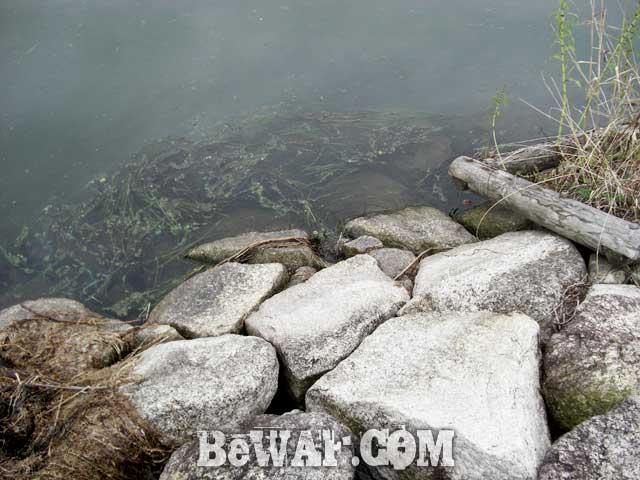 4setagawa-bass-turi-blog-ninki-guide-boat