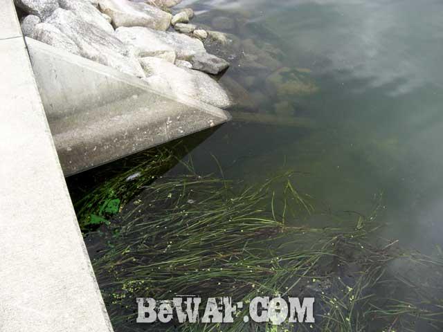 5-biwako-bass-chouka-shousai-ninki-blog