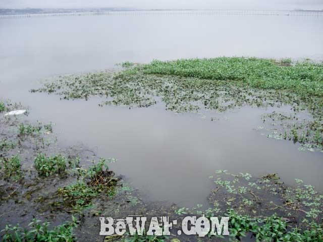 6biwako-bass-chouka-shousai-frog-basho