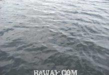 琵琶湖バスフィッシングガイドリポート ~渡辺様~ 40cm 13