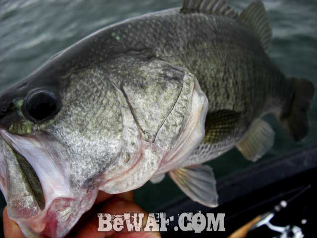 biwako bass fishing guide service kakuyasu 6