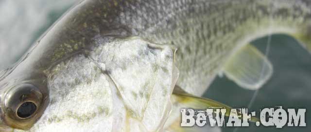biwako-bass-fuyu-no-hokuko-11