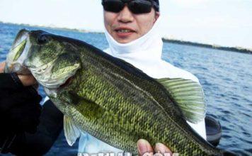 琵琶湖バスフィッシングガイドリポート~里様~ 40cm 11