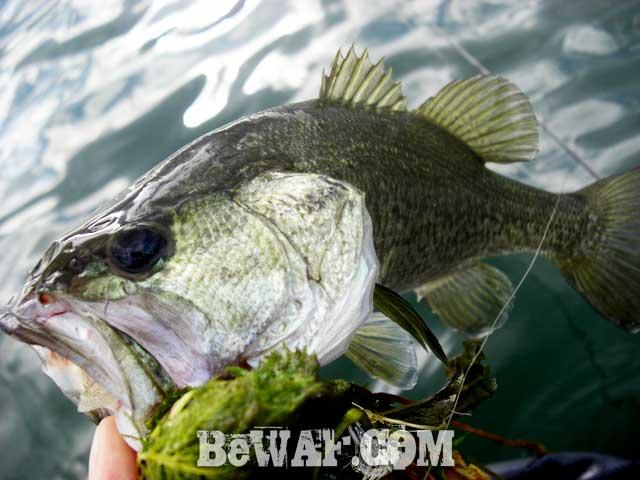 biwako bass guide yasui shousai dekabass 6